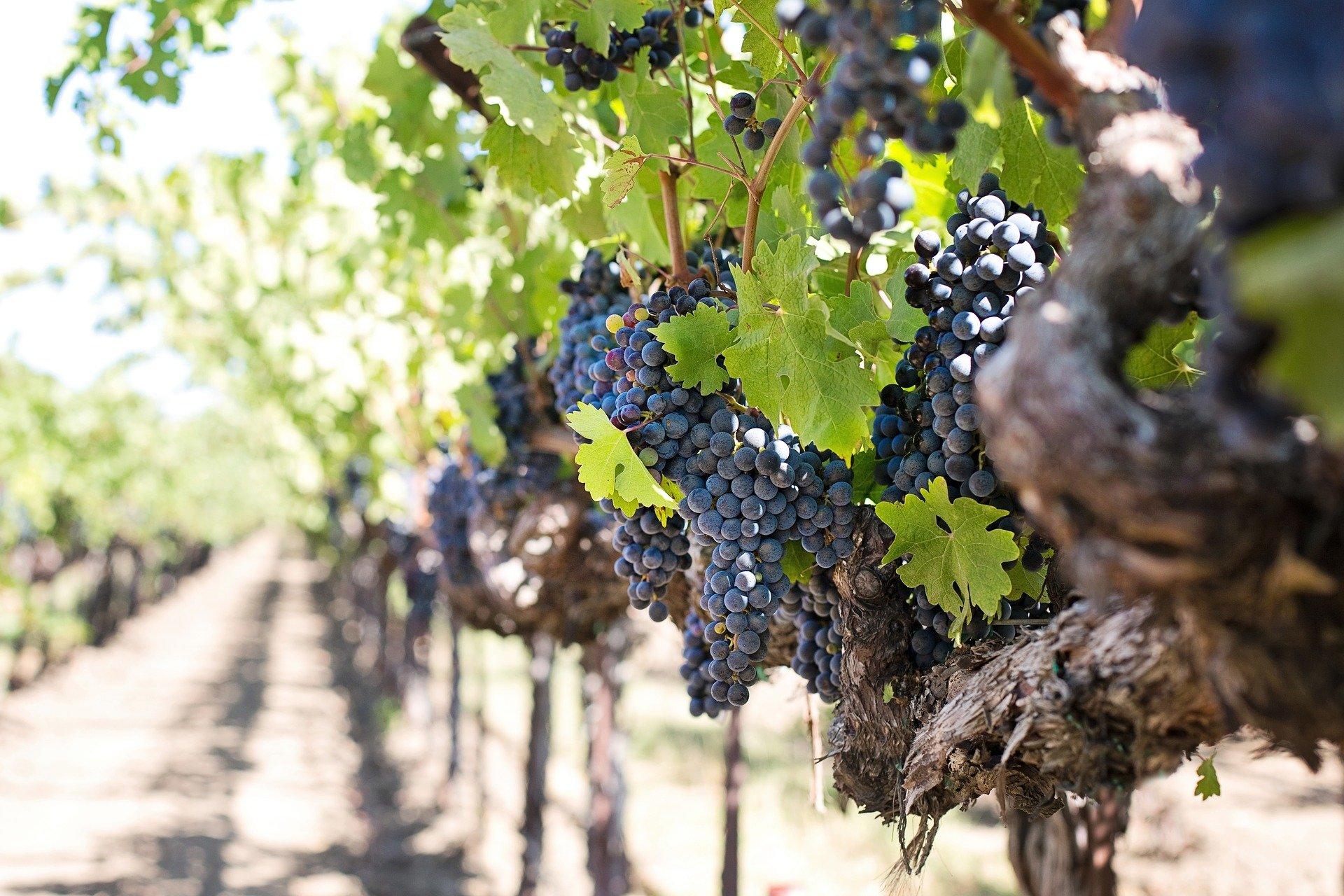 Entre Viñedos + Almuerzo con degustación de Vinos